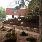 Planted and mulched