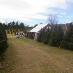 Christmas trees and our shed.